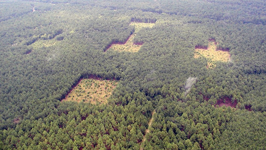 Areal view of deforested patches of forest