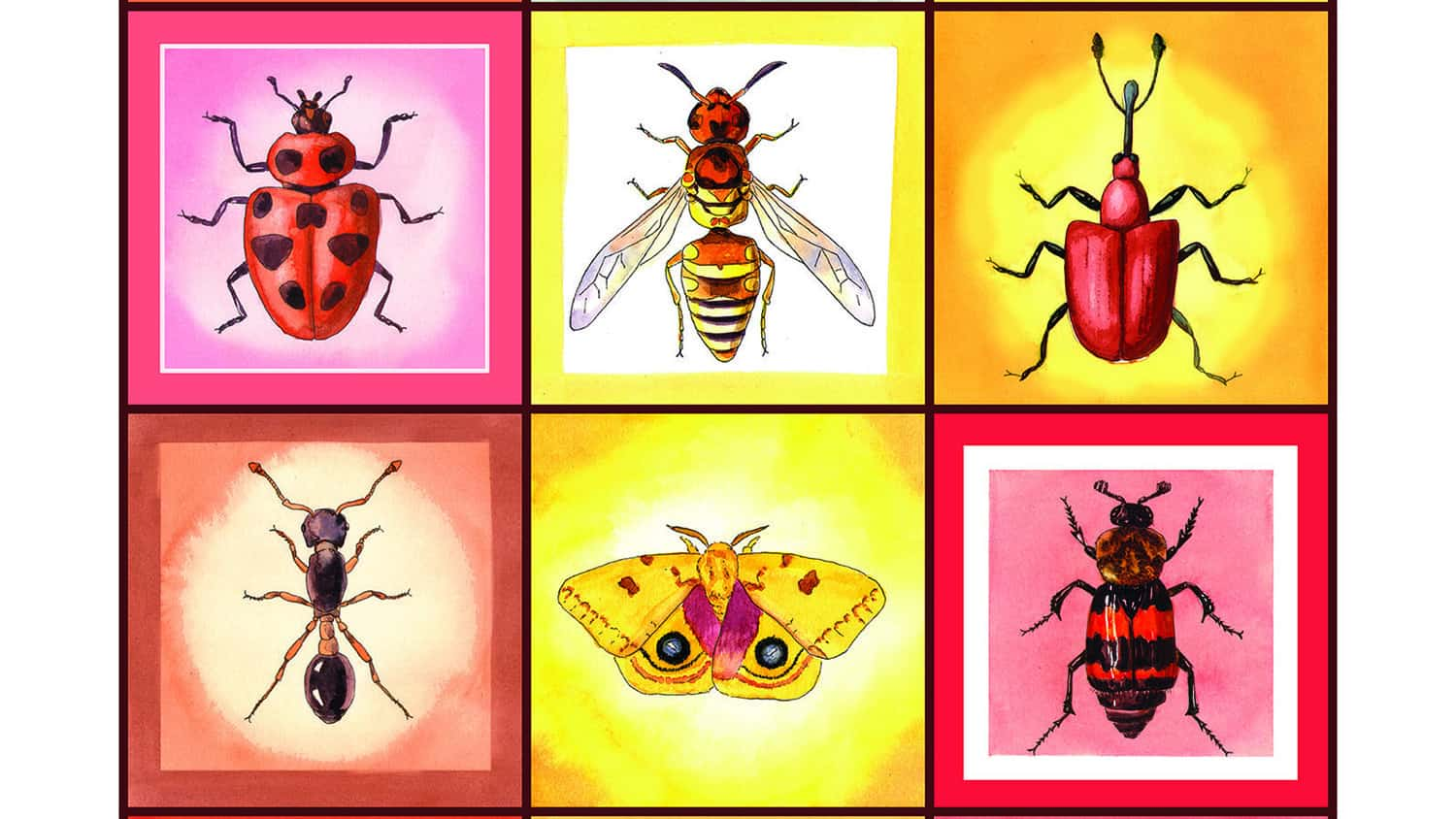 Illustrations of six different types of insects
