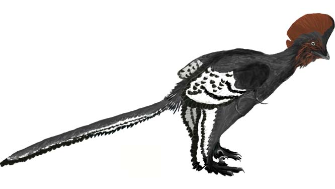 Illustration of Anchiornis huxleyi