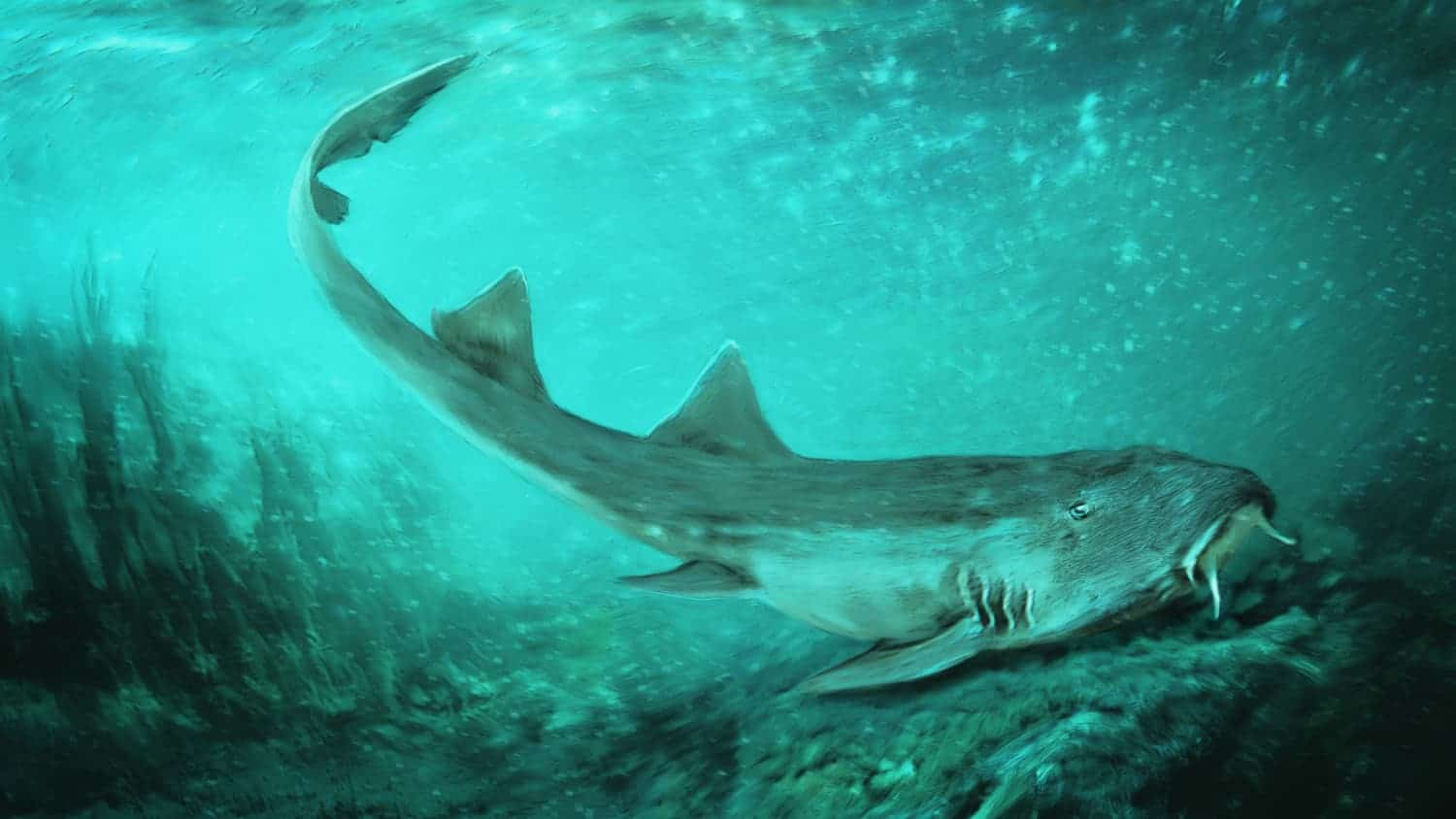Illustration of a Galagadon shark swimming in ocean water