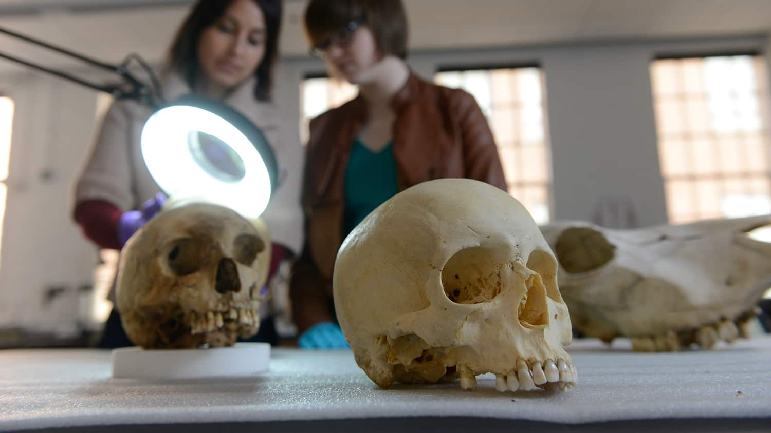 Ann Ross works in her forensic bone with a graduate student lab at the Park Shops