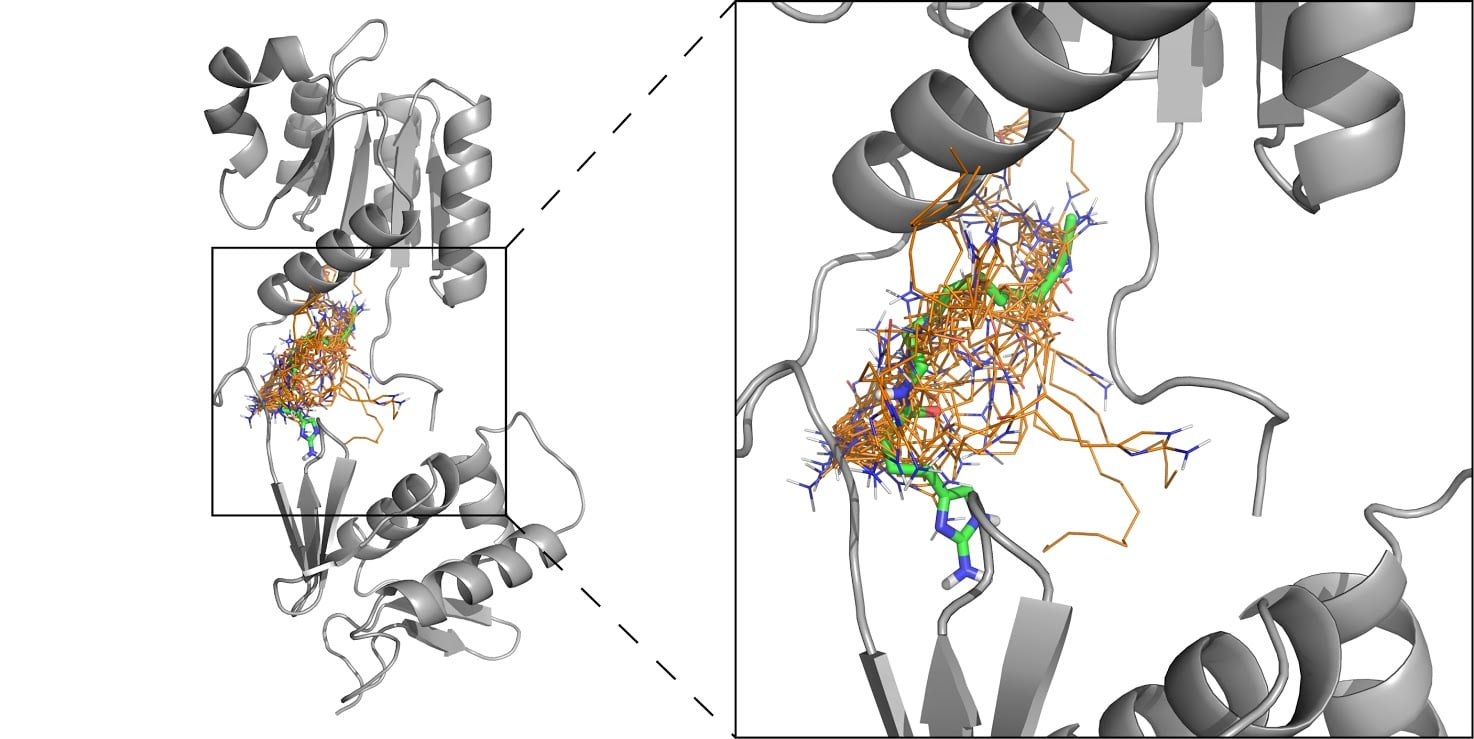 This composite image shows an orange cluster of structures of one of the Agile Sciences compounds, with the green indicating which of the structures is likely to be most effective. The compound is battling a protein (shown in gray) in acinetobacter baumannii, a multidrug-resistant bacteria often found in hospitals.