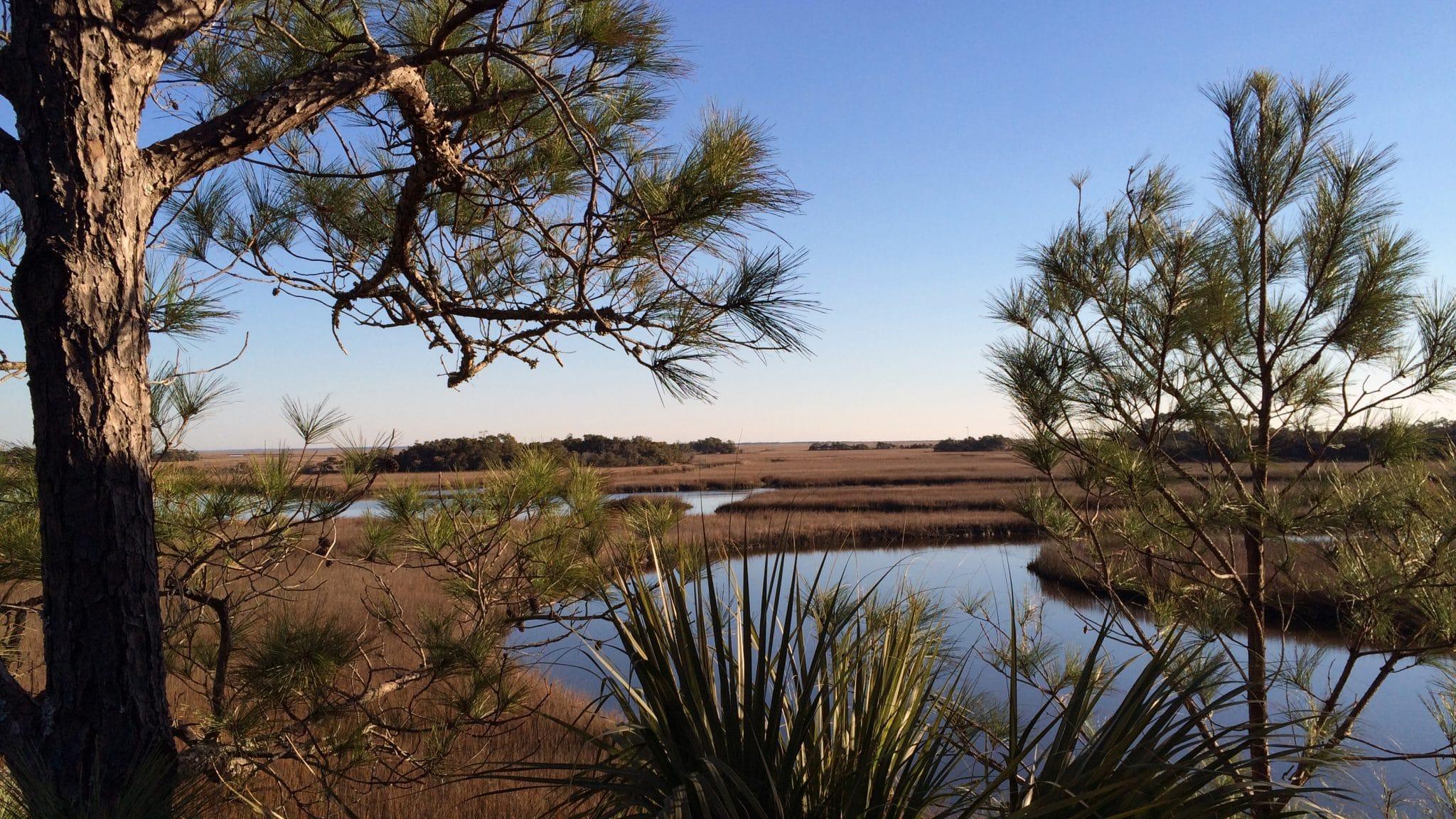 Bald Head Island marsh