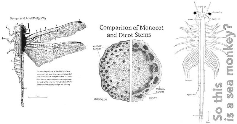 Dragonfly by Hayden Tarver; Stem Vascular Tissue by Maggie Jordan; Brine Shrimp (sea monkey) by Alana Stanley.