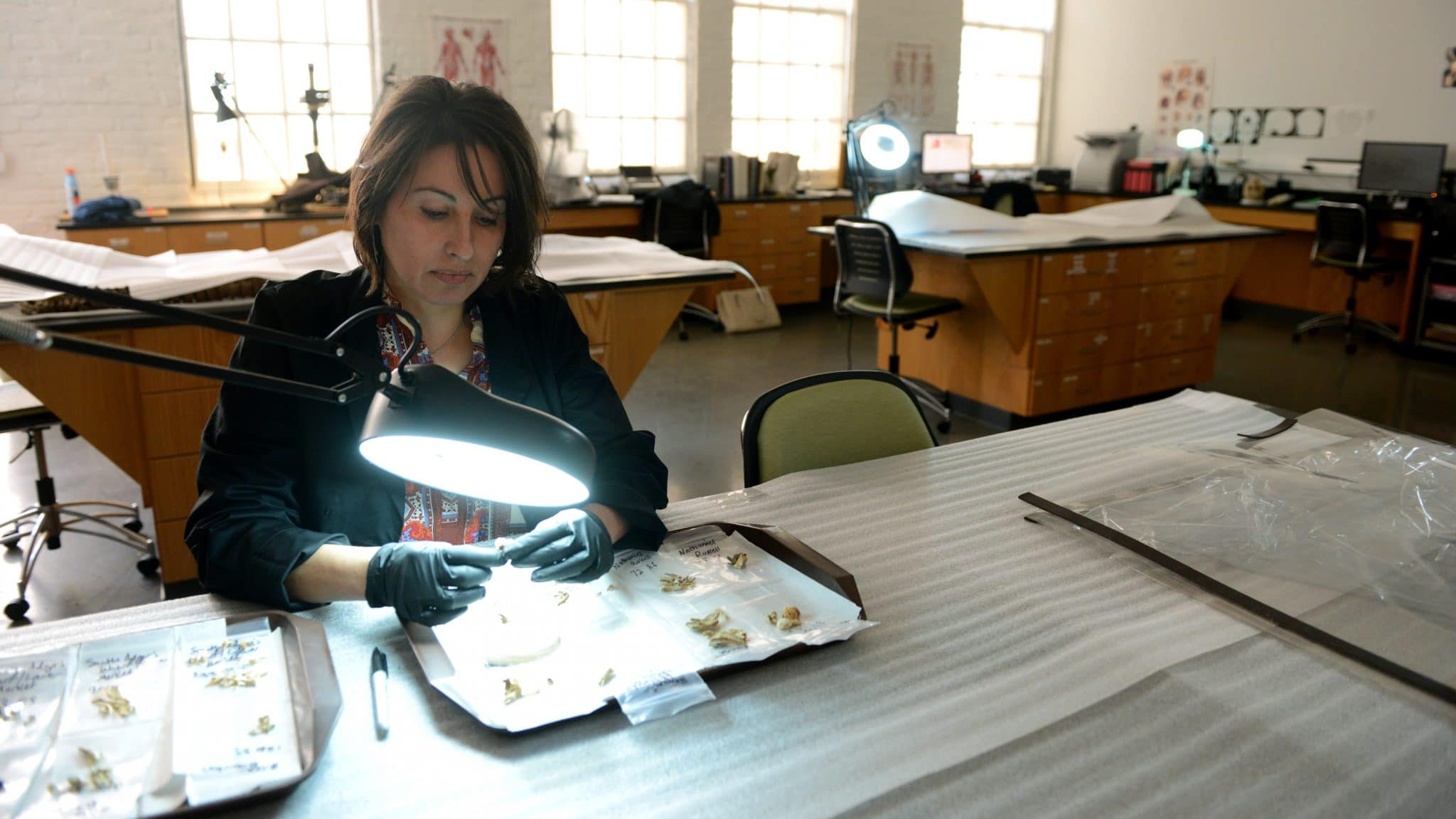 Ann Ross examines bones at a table in her lab