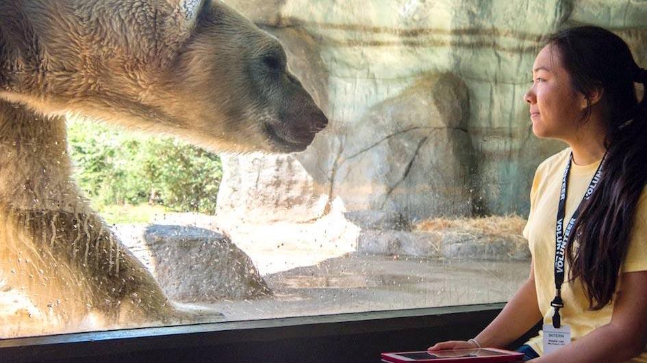 Natalie Liao internship at NC Zoo