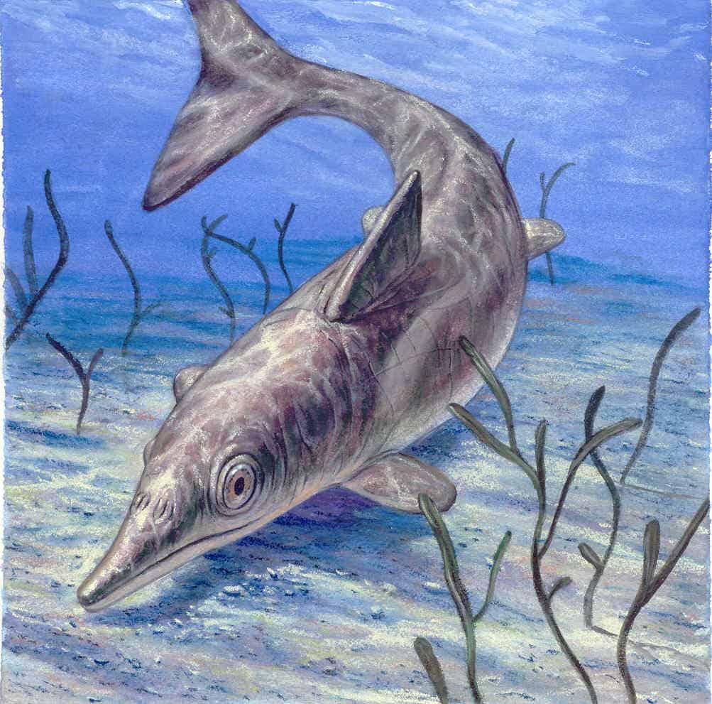 Illustration of a Stenopterygius ichthyosaur