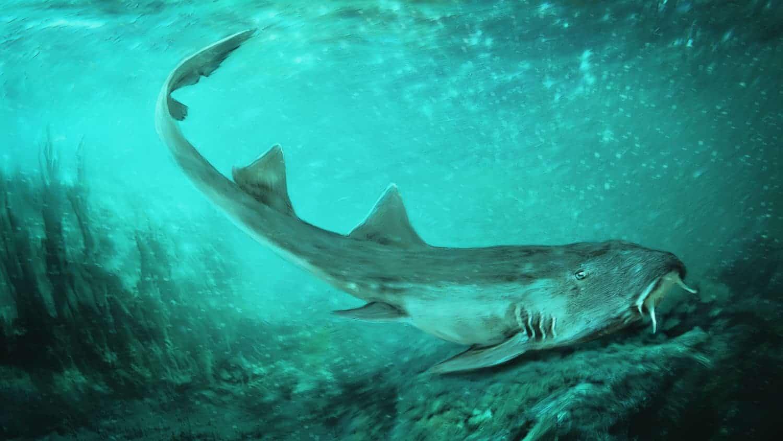 Illustration of a Galagadon shark swimming in ocean water