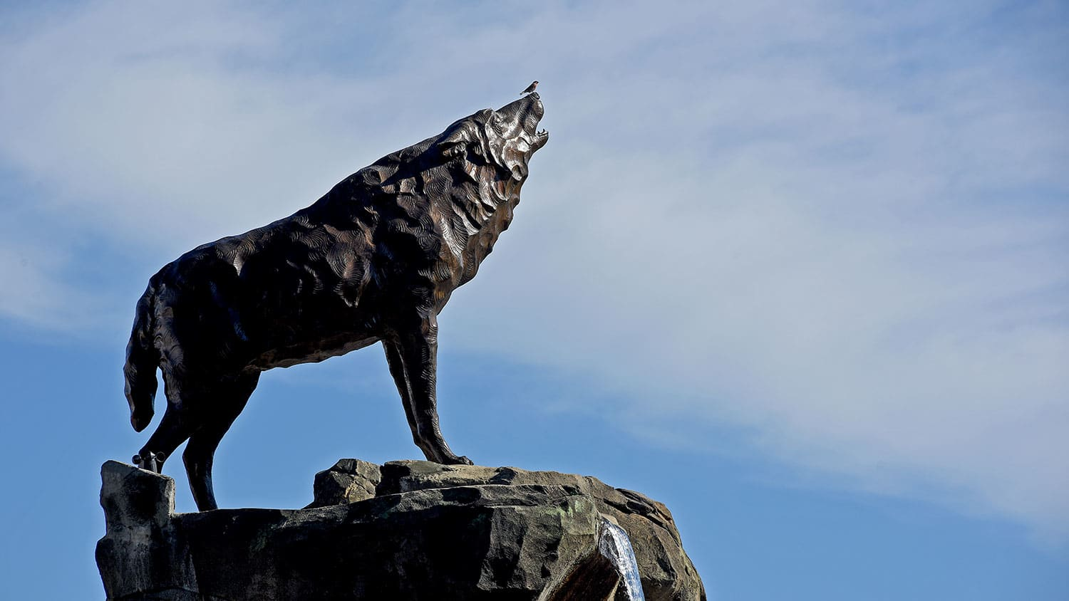 Bird sits on top of the wolf statues outside Murphy Football Center