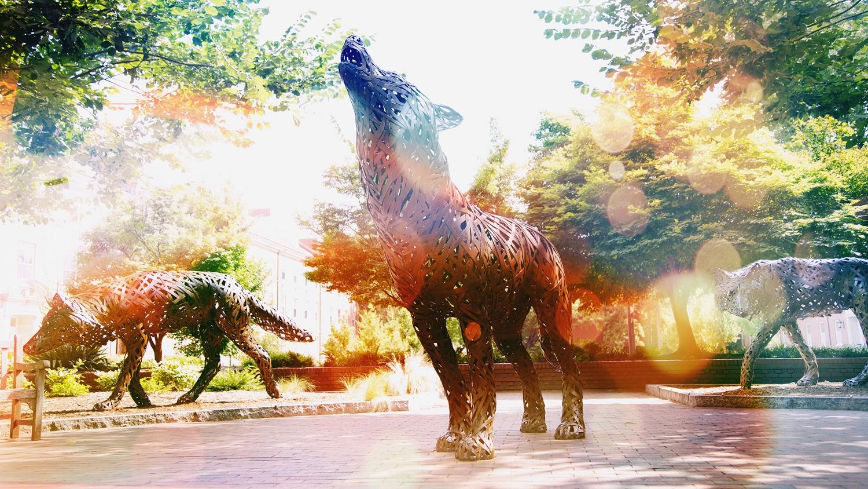 Metal wolves in the Brickyard