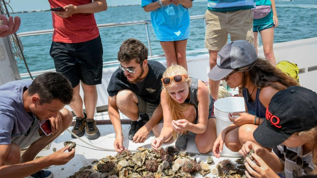 Students on a boat look at sea creatures they've just pulled in with a net