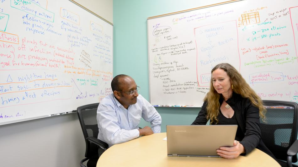 Two faculty work at a laptop in a room with formulas written on whiteboards in the background